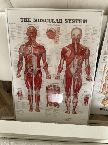 Diverse Posters anatomie in lijst